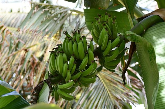cybresecurity and banana plant